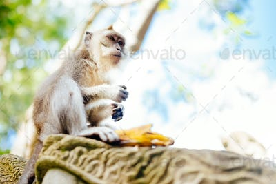 portrait of monkey in exotic, natural habitat