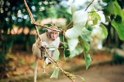 close up portrait of expressive baby monkey.
