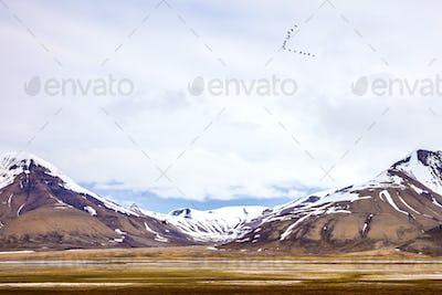 Birds flying between mountains in arctic summer landscape