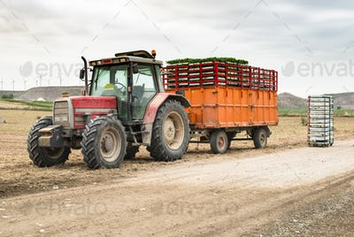 Tractor trailer loaded with seedlings