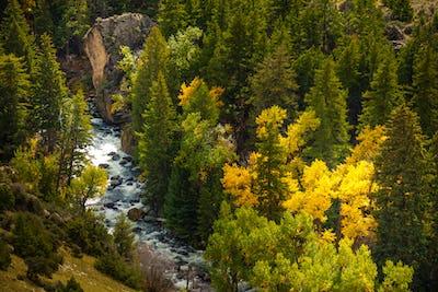 Tensleep Creek Wyoming Fall Colors