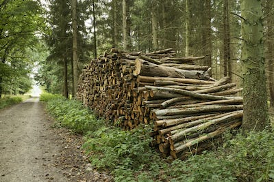Pile of cutted trunks in the forest