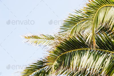 Palm leaves on the blue sky