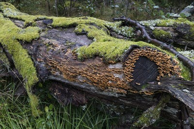 Tree trunk with green moss and Trametes versicolor