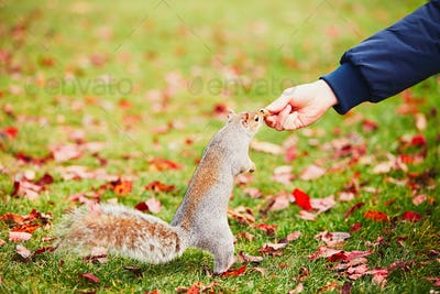 Cute squirrel in the park
