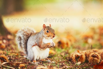 Cute squirrel in autumn scene