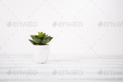 Small artificial indoor plant on a white background
