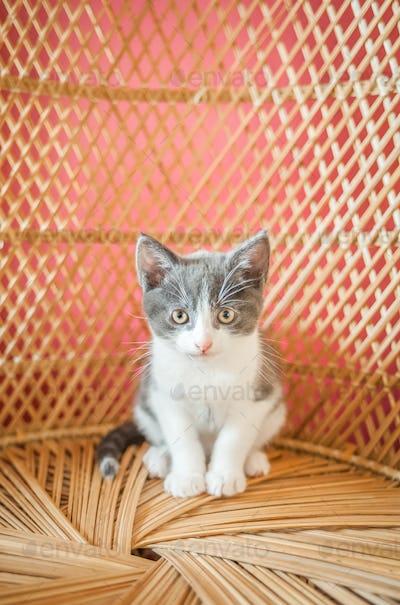 I am a kitten