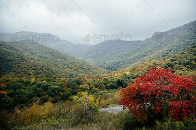 mountains in autumn forest