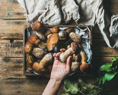 Woman's hand holding one of fresh picked porcini mushrooms