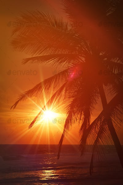 Tropical sunset scene with palms