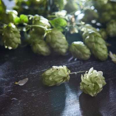 Wooden background with fresh green hop