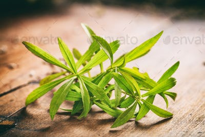 Fresh tarragon on wooden background
