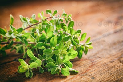 Fresh oregano twig on wooden background