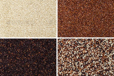 Yellow, red, black and mixed quinoa seeds