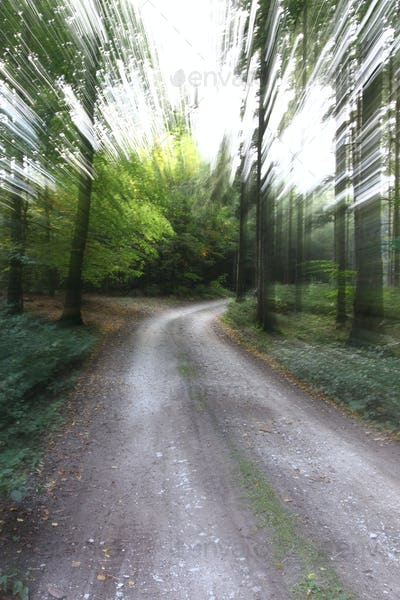 Quickly on the forest road