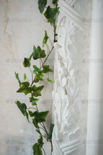White art stucco gypsum wall with a grean loach branch on it