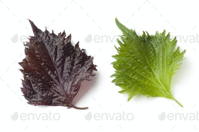 Fresh green and red shiso leaf