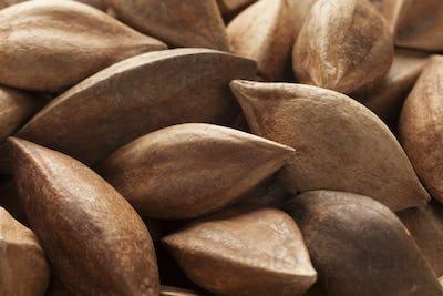 Unshelled pili nuts full frame