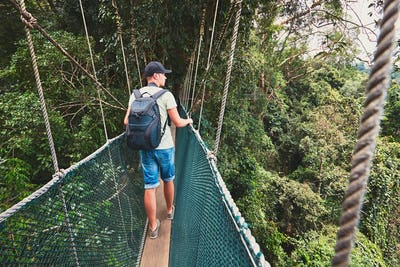 Canopy walk in rainforest