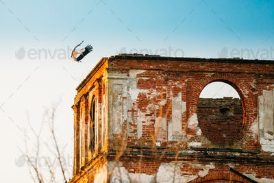 European White Stork Lands On Wall Of Old Ruined Orthodox Church