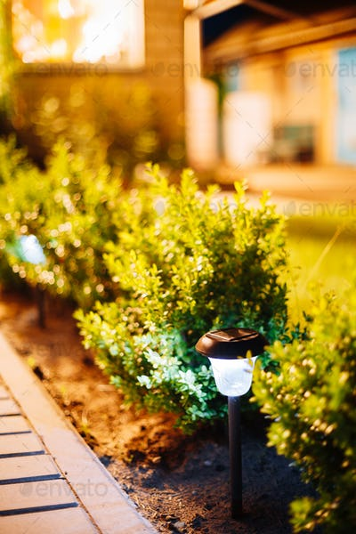 Night View Viola Flowerbed Illuminated Energy-Saving Solar Power
