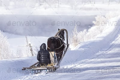 horse pulling a sledge in winter sunny day