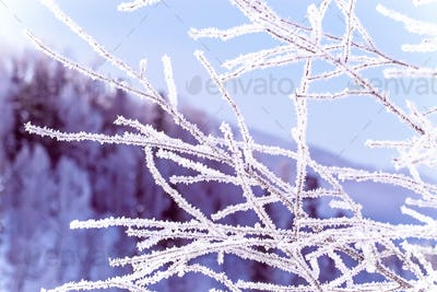frozen winter tree branches