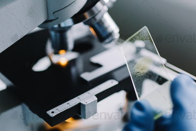 Crop hands holding glass for microscope