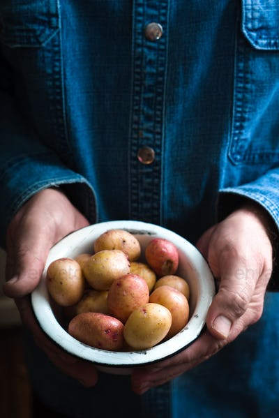 Potatoes in a white bowl in the hands of a man in a blue shirt