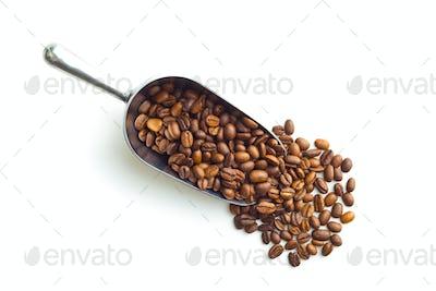 Coffee beans in metal scoop.