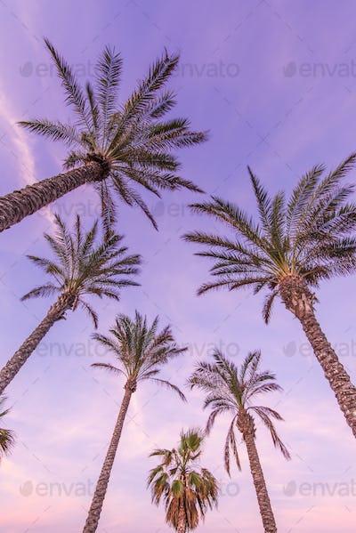 Tropical palm trees on the beach