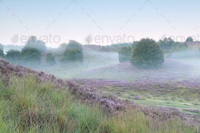 tranquil misty morning in heather hills