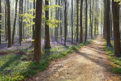 hiking path in spring flowering forest
