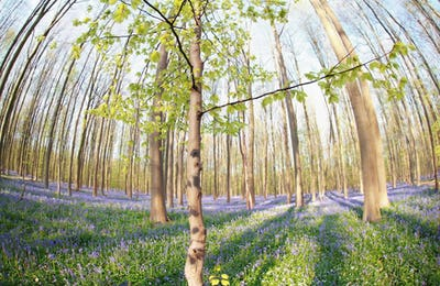 spring forest with many flowers