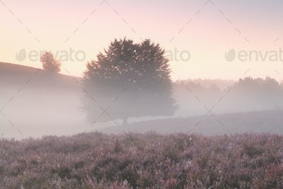 misty morning with tree and wildflowers