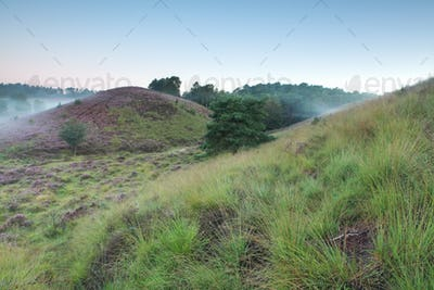 green grassy hills in morning fog