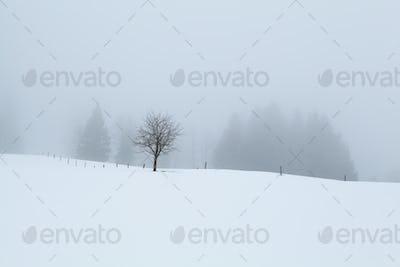 foggy morning on snowy hills in winter