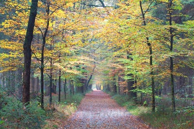 path in autumn beech forest