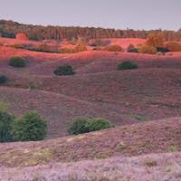 last sunbeams over hills with pink heather