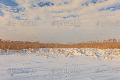 comana lake in winter