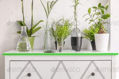 Plants in pots and flasks, standing on a white chest