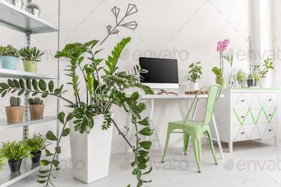 Houseplants in a bright, minimalist interior