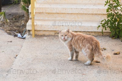 Concept of homeless animals - Stray dirty sadness cat on the street