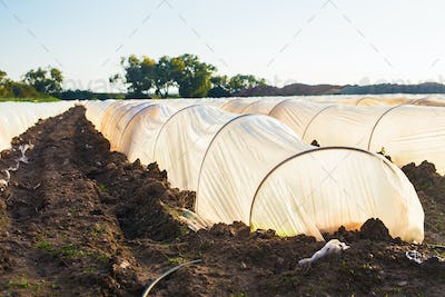 greenhouses in country garden in spring