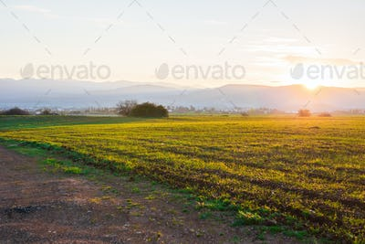 green rural field at the early morning