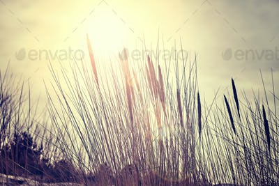 Color toned dried plants against the sun, nature background.
