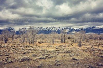 Retro stylized landscape in the Grand Teton National Park, Wyomi