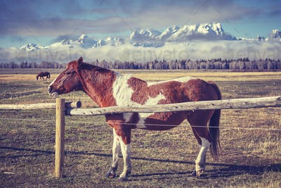 Vintage toned photo of a horse behind wood fence, Grand Teton Na