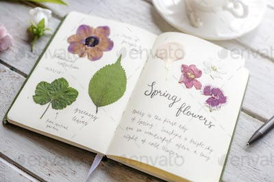 Detail of Dried Flowers Collection in Notebook Handmade Work Hob